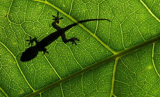 Theuth, the chameleon-God, is the '/' between death/life, light/dark, logos/mythos